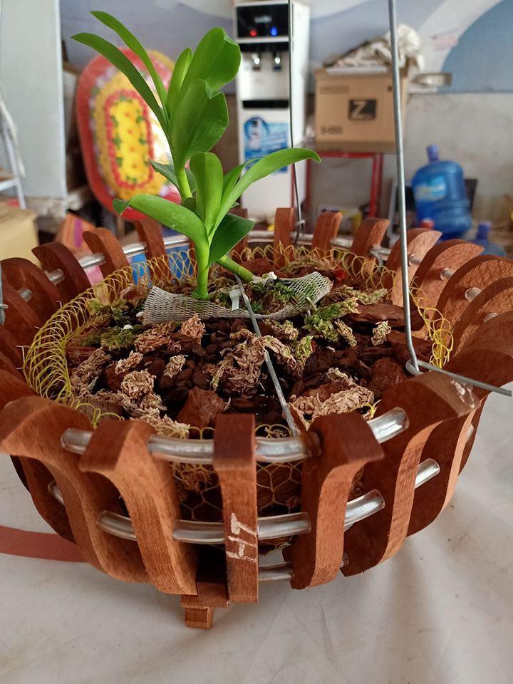 Lan hồ điệp trồng bằng vỏ thông kết hợp rêu.