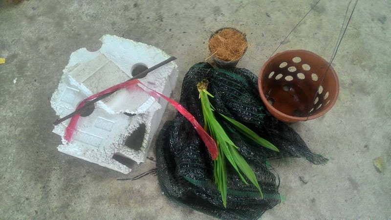 trồng lan bằng xơ dừa