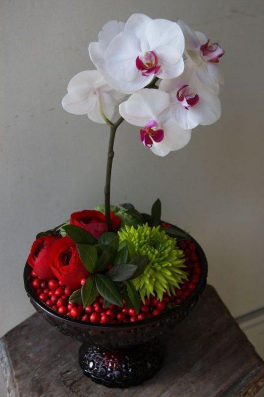 Sự tinh khôi từ hoa lan hồ điệp trắng.