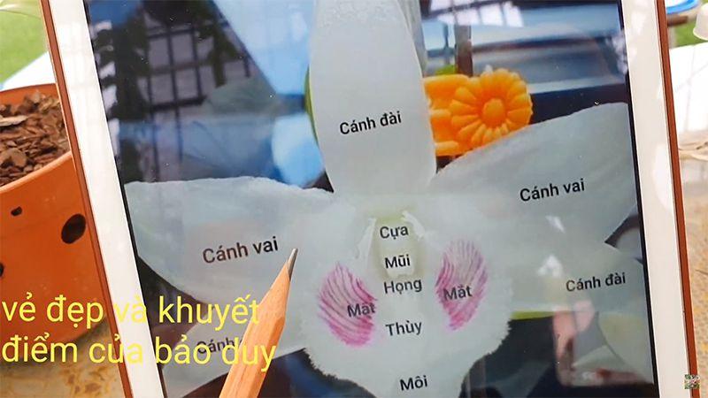 Tổng thể mặt hoa Bảo Duy 5 cánh trắng.